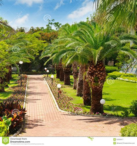 tropical palm trees tropical palm trees and lawn stock photo image 52325977