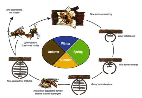 hornet cycle diagram hornet cycle diagram 28 images msttpa go tech licensed