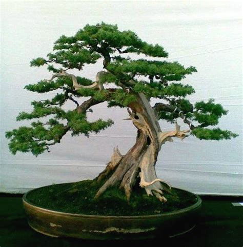 bonzi tree 25 best ideas about bonsai tattoo on pinterest bonsai