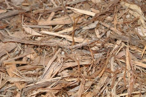 top 28 pine mulch problems railway sleepers choose