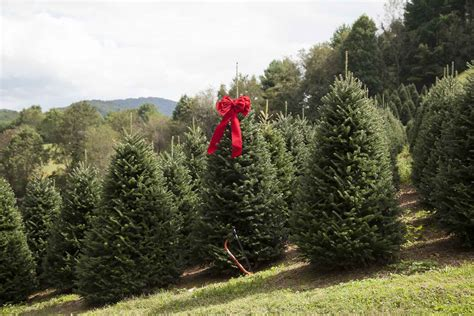 marion nc christmas tree farm little switzerland into the 2017 edible asheville