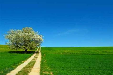 imagenes de paisajes y caminos murales paisajes camino y co verde