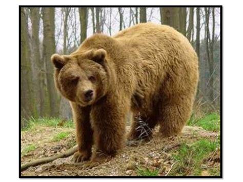 imagenes de animales terrestres pin terrestres on pinterest