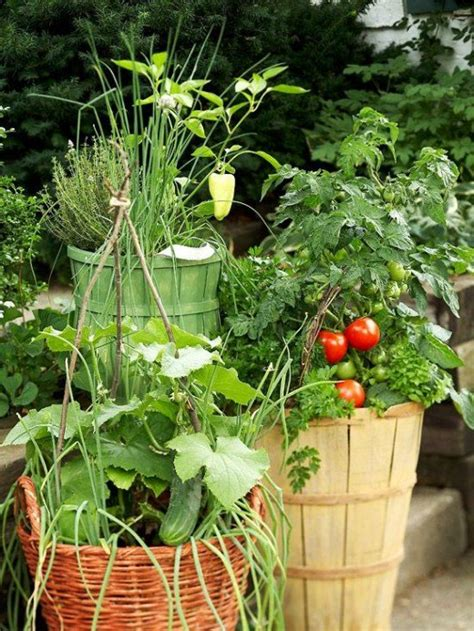 Container Tomato Gardening Dengarden Vegetable Gardens In Containers