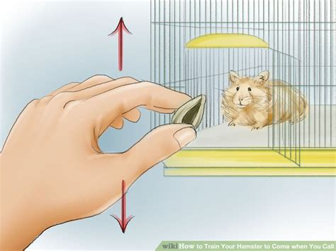 how to my to come when i call how to your hamster to come when you call 12 steps