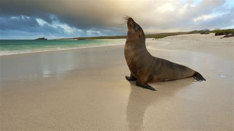 sea lion wallpaper  background image  id