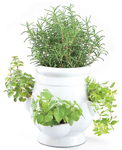 Windowsill Pots For Herbs Windowsill Herb Garden Kit Traditional Indoor Pots And