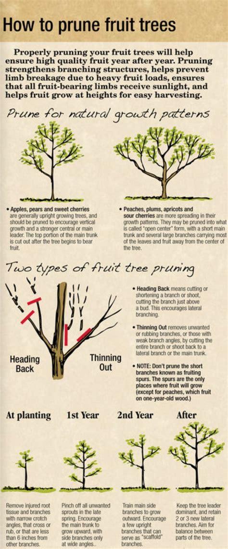 how do you prune fruit trees 88 b 228 sta bilderna om how does your garden grow p 229