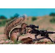 Wallpapers Funny Animals With Guns Pictures And Images