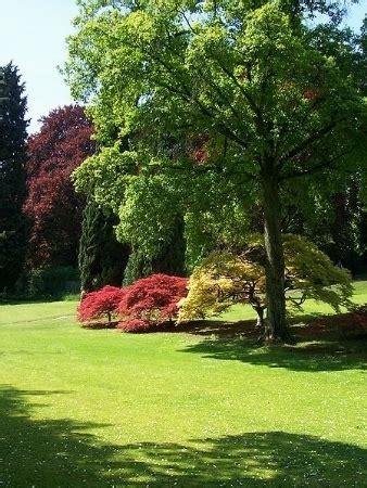 alberi giardino alberi da giardino piante da giardino alberi per il