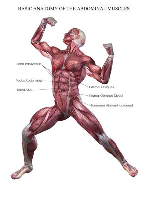 effective abdominal exercises hanging leg raises