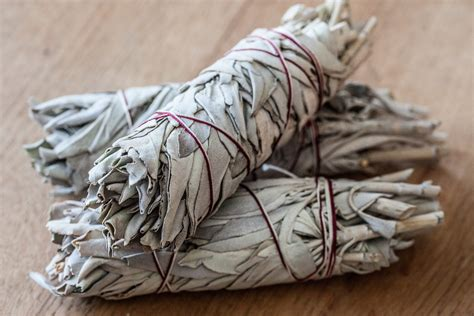 where can i buy sage to cleanse my house what is the purpose of burning sage leaftv