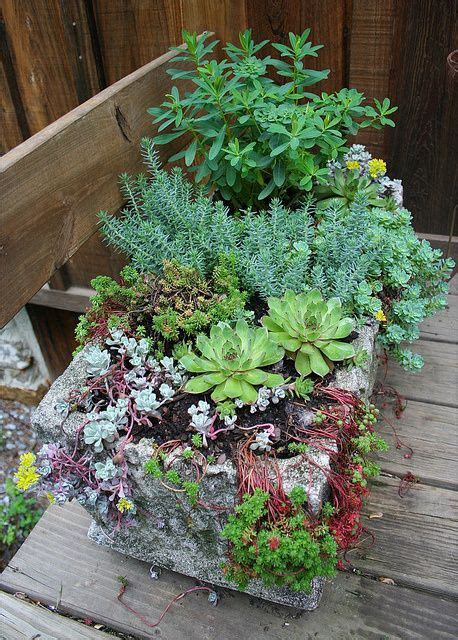 pin by christa roth on gardens flowers veggies and peace