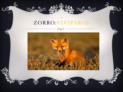 imagenes de animales viviparos tipos de reproduccion de los animales oviparos