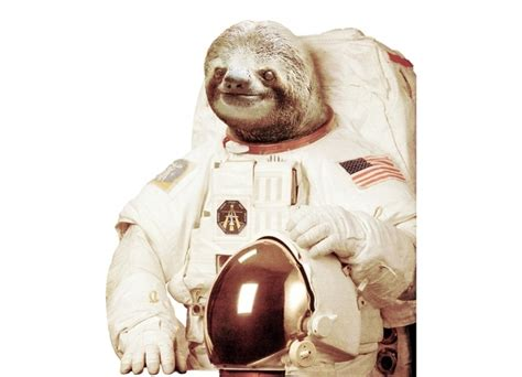Astronaut Sloth Meme - astronaut sloth pics about space