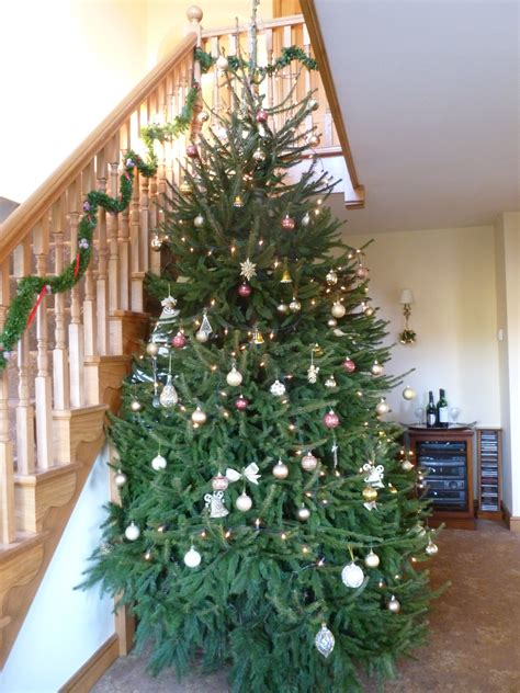 dinmore christmas trees photo albums perfect homes