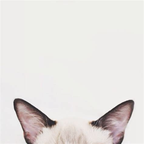 cat wallpaper we heart it grunge aesthetic tumblr photography pale