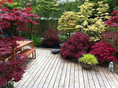 japanese maples so many awesome colorful varieties to