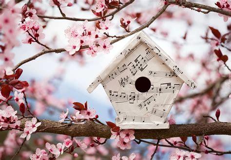 love birds house music kwitnące drzewo owocowe karmnik dla ptak 243 w wiosna