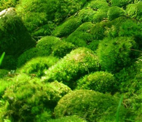 mosses and liverworts animals and plants find fun facts