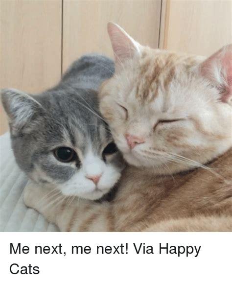 happy cat meme 25 best memes about happy cat happy cat memes