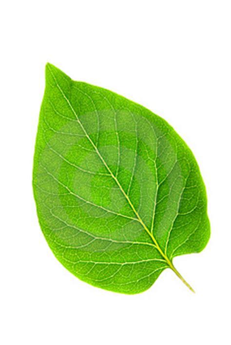 imagenes de hojas verdes mol 233 culas de procesos biol 243 gicos blogodisea
