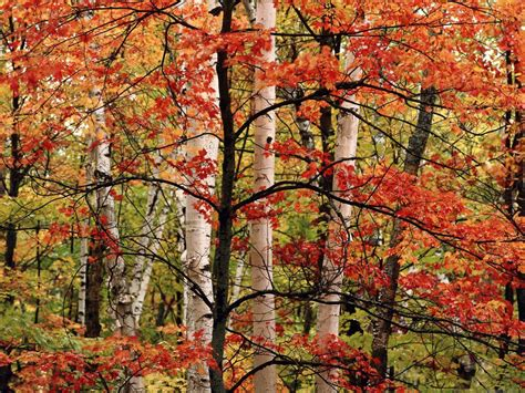only nature beautiful tree wallpapers only nature beautiful tree wallpapers