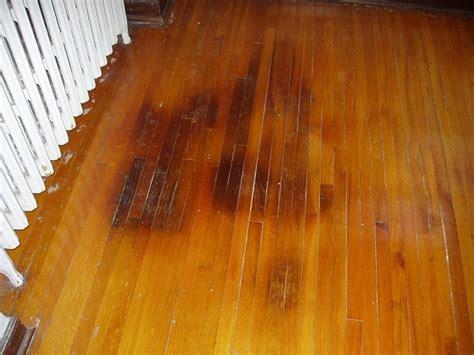 How to clean cat pee from hardwood floor