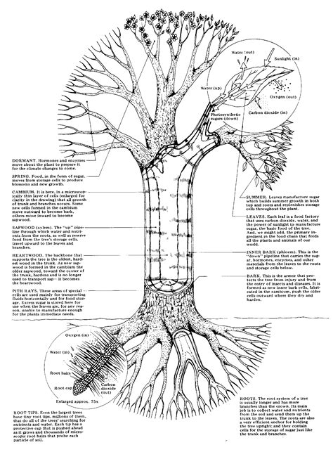 parts of a tree diagram plant biology disease diagnosing treatment sick tree help