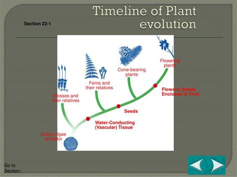 Section 22 2 Bryophytes by Ppt Science Starter Powerpoint Presentation Id 4280765