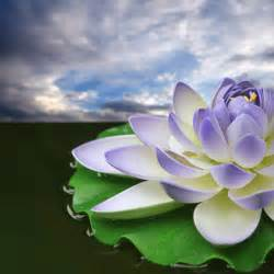 Lotus High Beautiful Wallpapers Lotus Wallpapers Hd