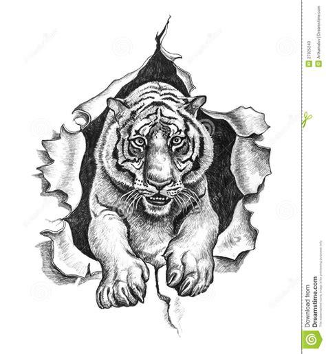dessin au crayon d un tigre photos stock image 27925243