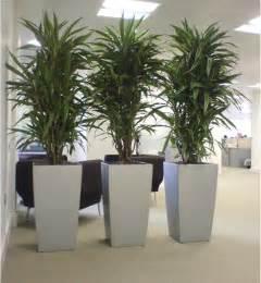 large indoor plants low light large house plants low light