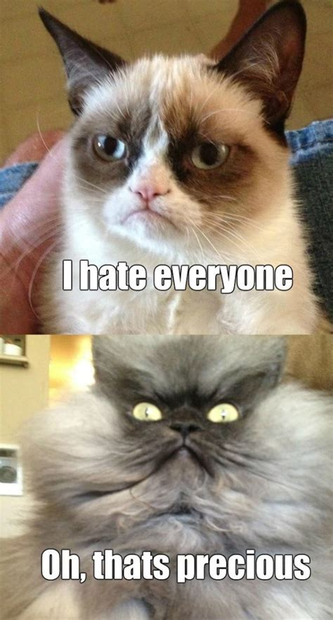 Cat Meow Meme - colonel meow is not amused funlexia funny pictures