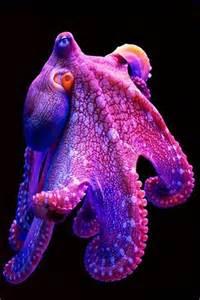 octopus colors octopus and marine on