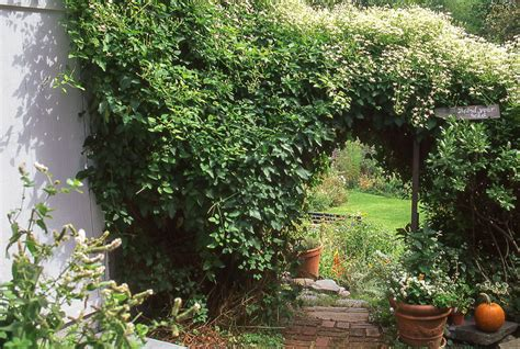 fast growing vines how to pick the right vine