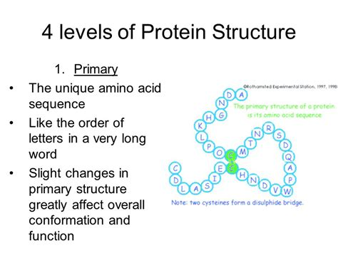 4 protein structure levels option c cells energy ppt