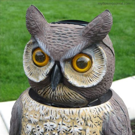 Garden Owl by An Owl On Your Porch To Keep Muslims Away Ar15