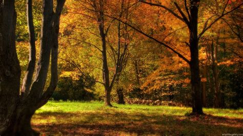 tree background hd photos beautiful trees hd wallpapers and pictures collection