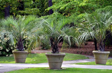 Tropical Planters tropical planters photograph by urso