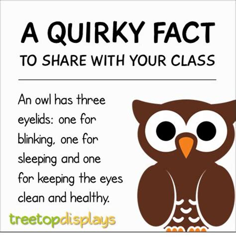 best 25 owl facts ideas on facts about owls owl information and owls kindergarten