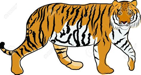 clipart tiger tiger clipart jungle animal pencil and in color tiger