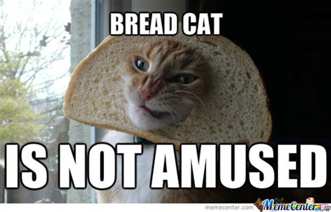 bread cat not amused memes best collection of funny bread