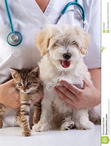 little dog and cat at the veterinary royalty free stock