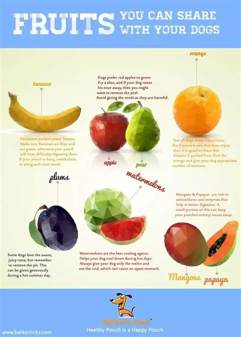 fruit upset stomach can dogs eat fruit quora