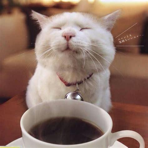 cat cat coffee cat cat memes