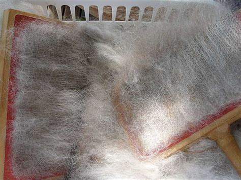 How To Keep A From Shedding So Much by German Shepherd Shedding Grooming And 3 Usefil Tips
