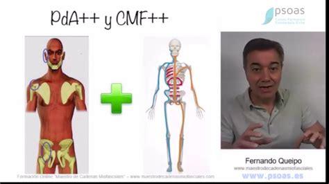 cadenas musculares youtube 2 rcp claves de la corecci 243 n causal cadenas