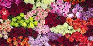 what do the colors of flowers 14 color meanings what do the colors of roses