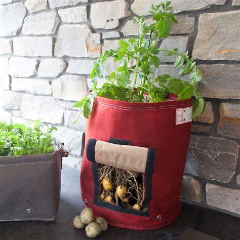 bloembagz potato planter the green